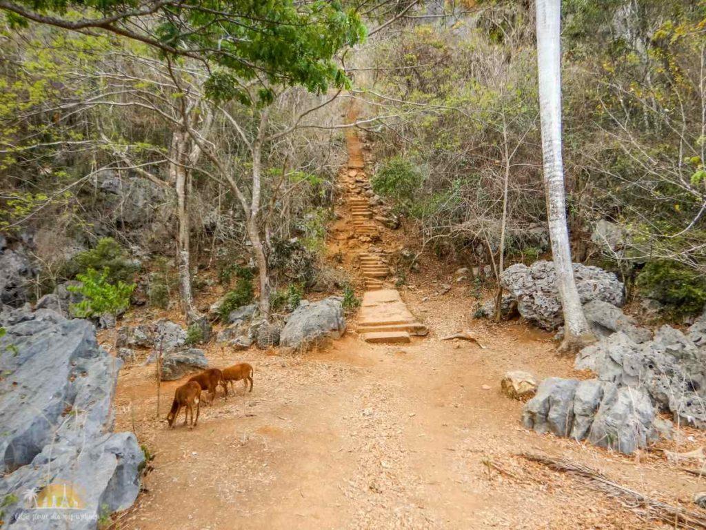 Podejście do jaskini Cueva de la Vaca