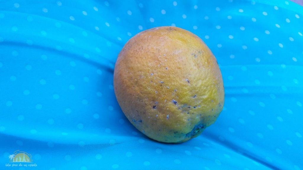 Grecja Peloponez pomarańcze