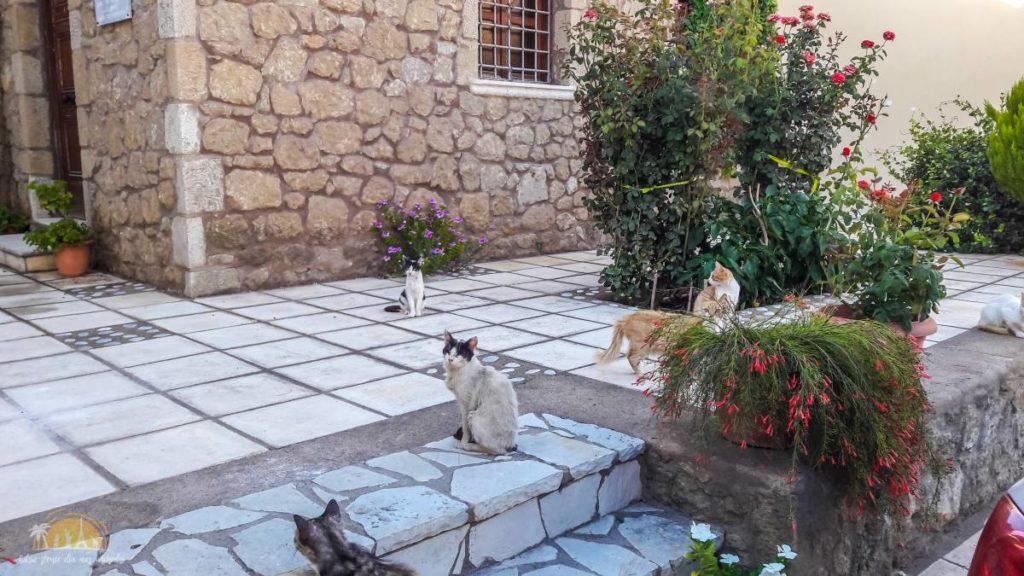 Grecja Kalamata koty