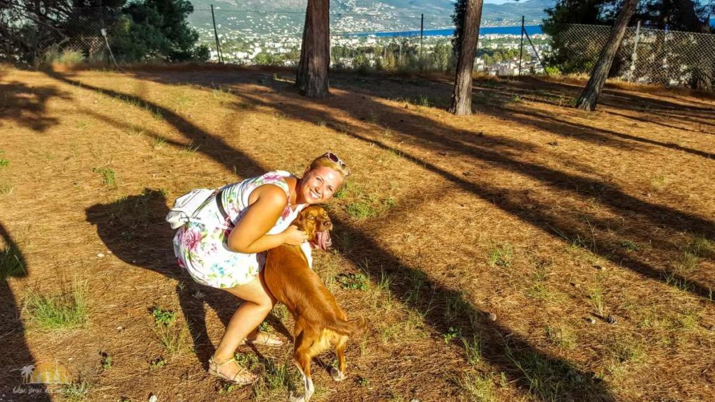 Grecja Zamek Kalamata i widok na miasto z murów i pies