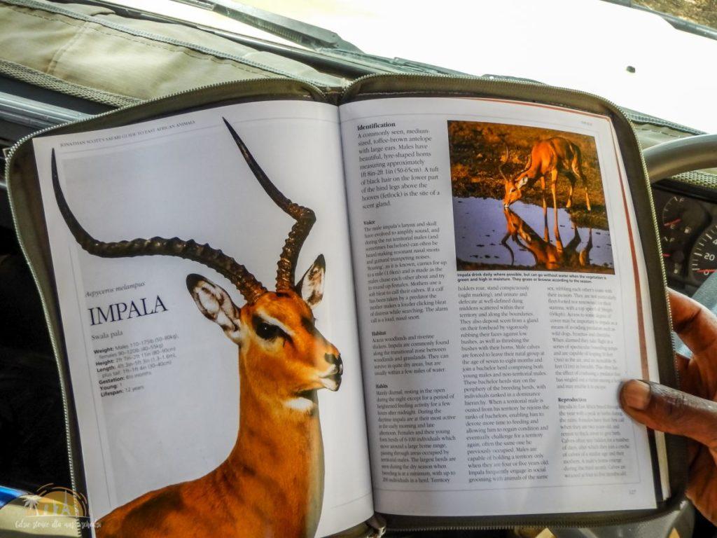 Tanzania safari Lake Manyara (13)