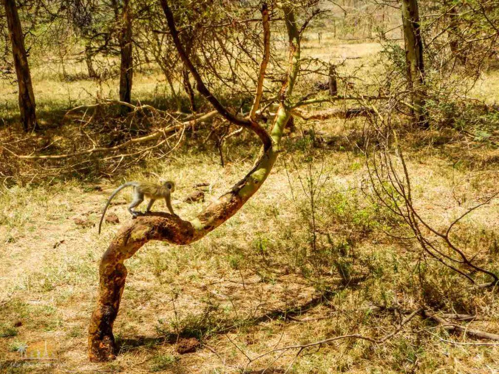 Tanzania safari Lake Manyara (15)