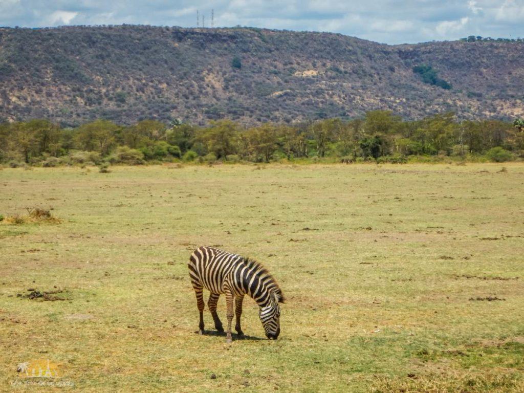 Tanzania safari Lake Manyara (17)