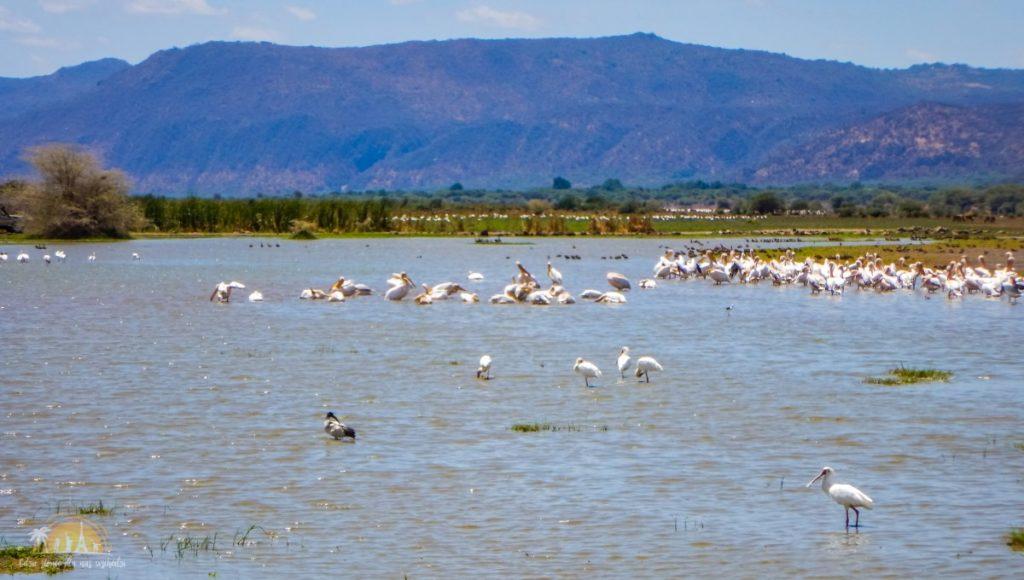 Tanzania safari Lake Manyara (18)