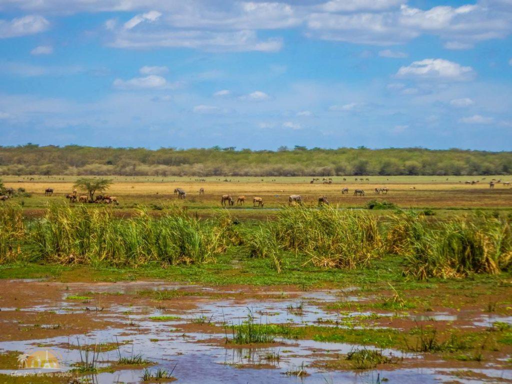 Tanzania safari Lake Manyara (21)