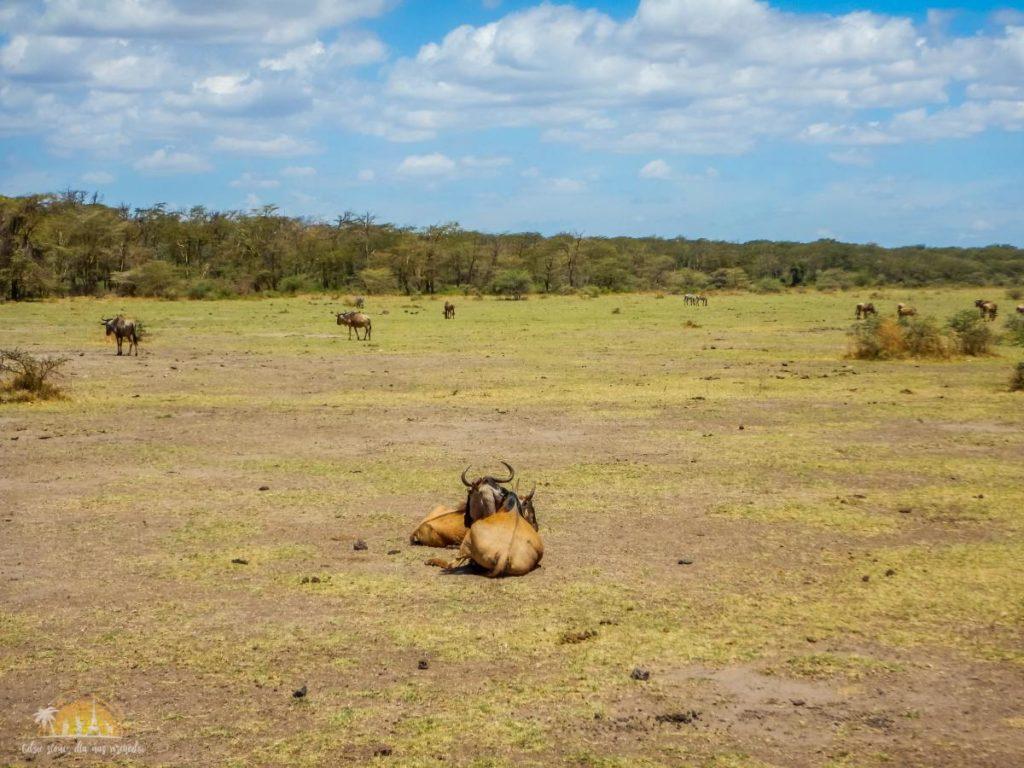 Tanzania safari Lake Manyara (26)