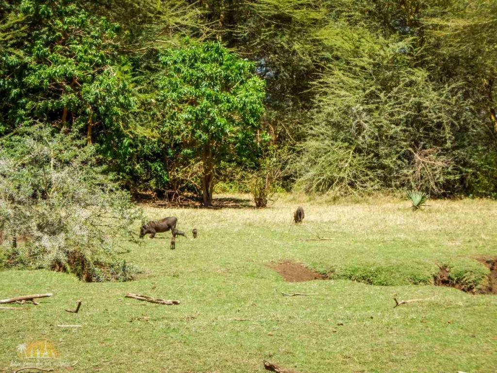 Tanzania safari Lake Manyara (28)