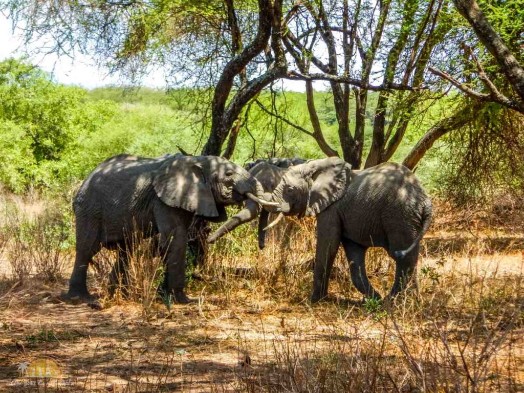Tanzania safari Lake Manyara (29)