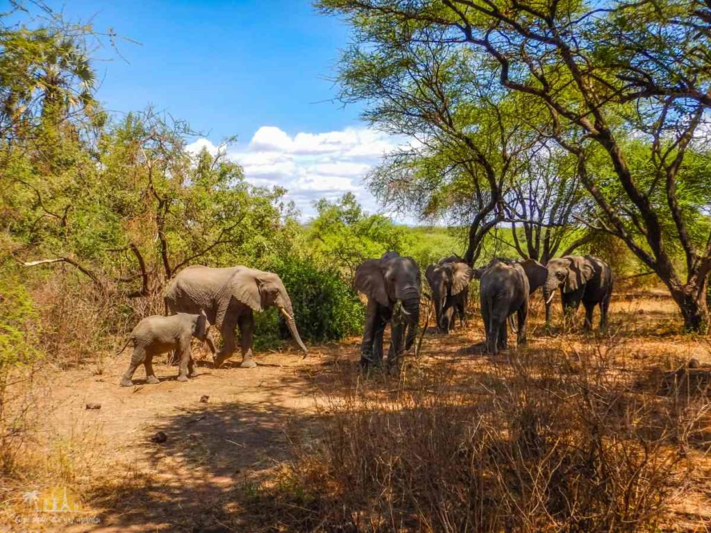 Tanzania safari Lake Manyara (31)