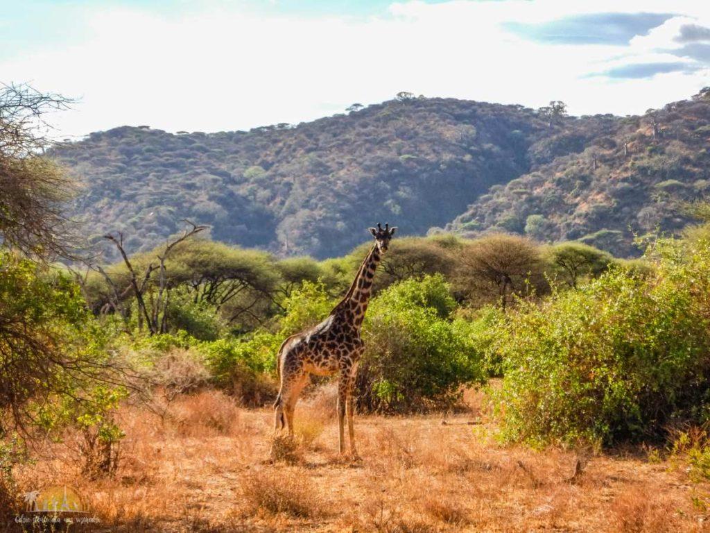 Tanzania safari Lake Manyara (37)