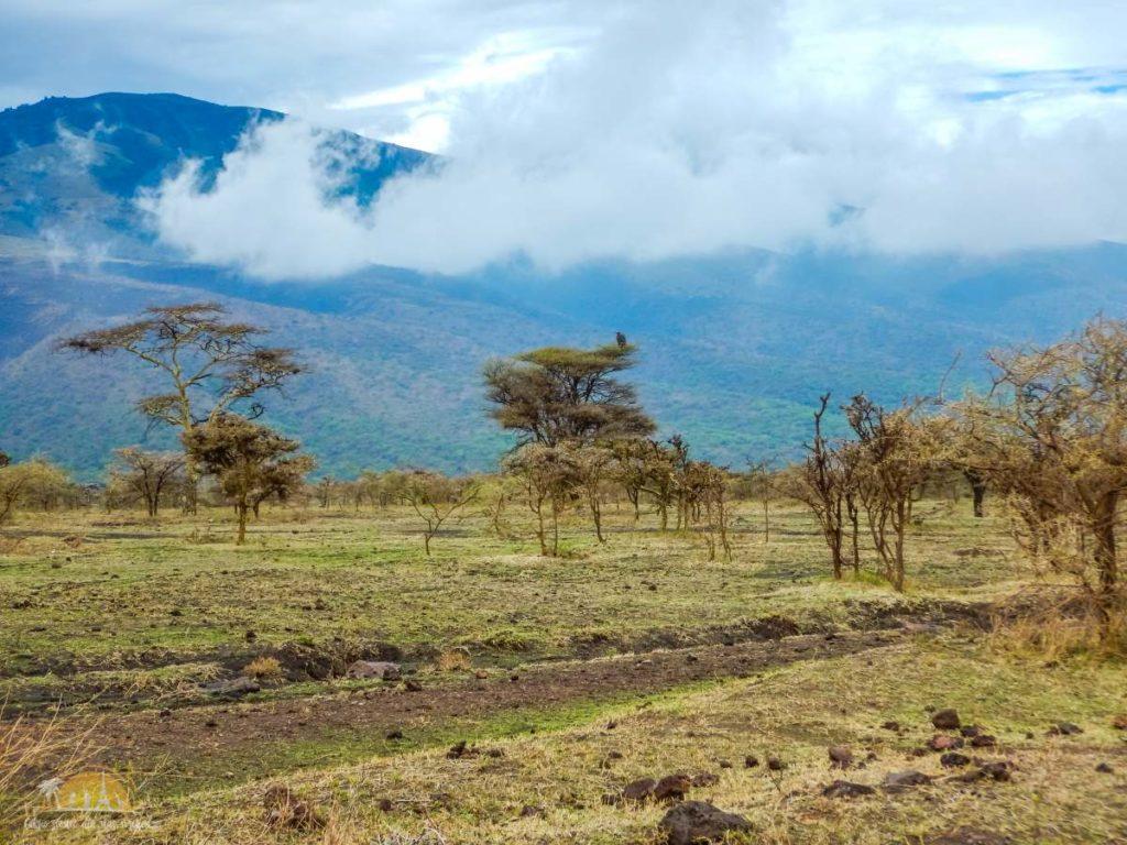 Tanzania safari Ngorongoro (48)