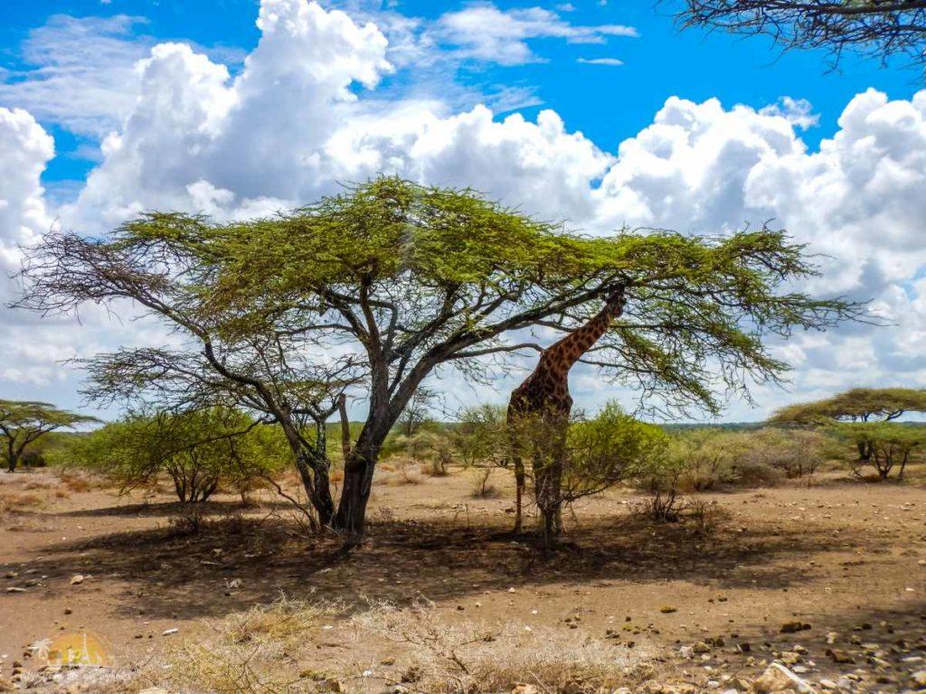 Tanzania safari Ngorongoro (49)