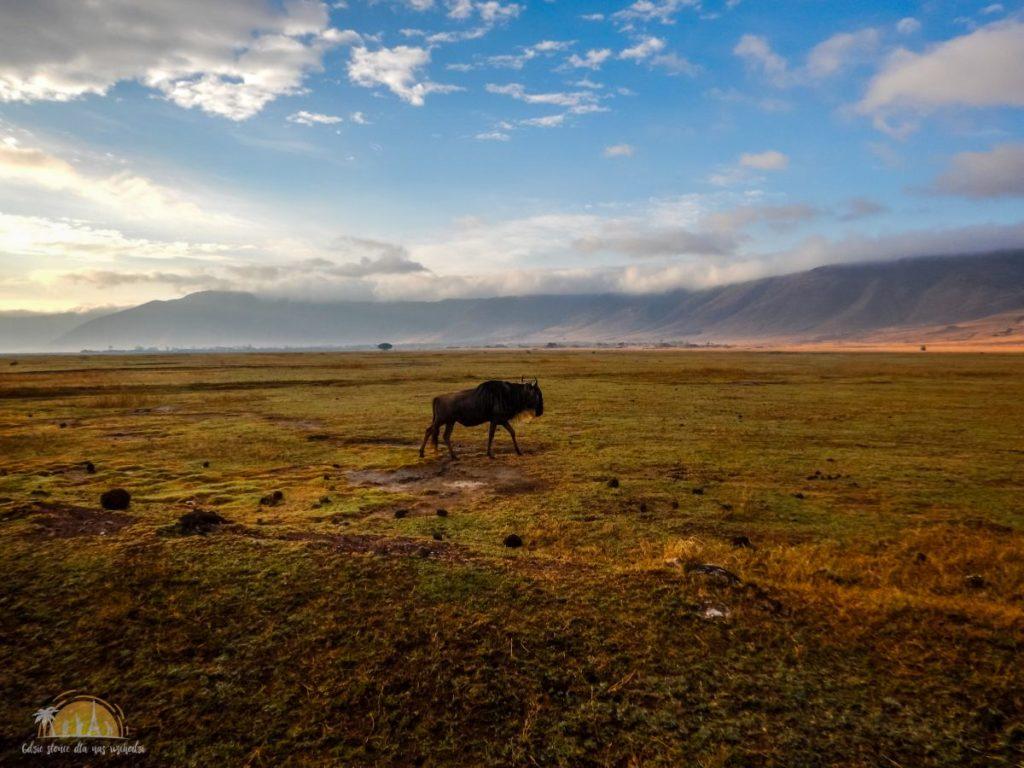 Tanzania safari Ngorongoro (78)