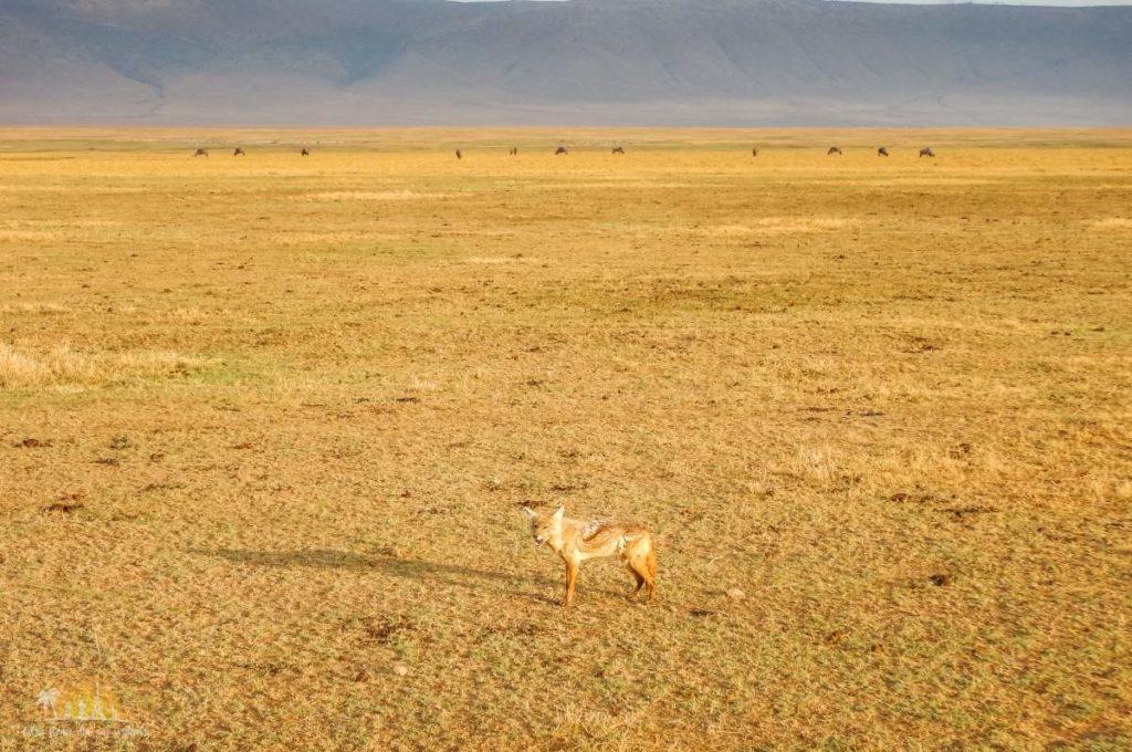 Tanzania safari Ngorongoro (80)