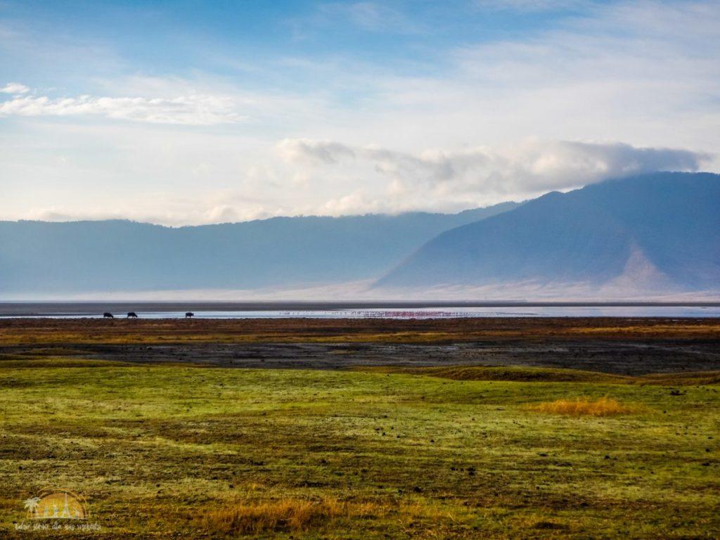 Tanzania safari Ngorongoro (81)