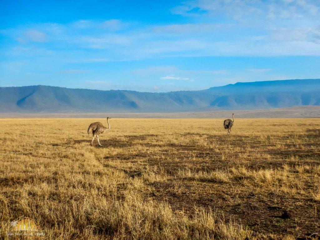 Tanzania safari Ngorongoro (84)