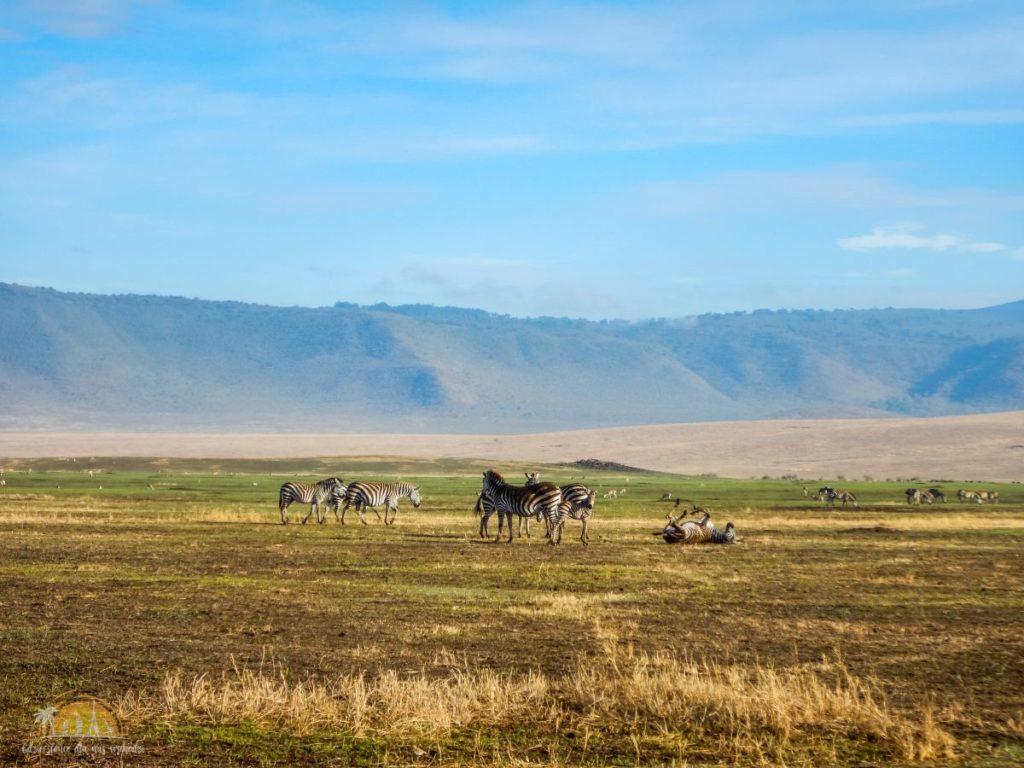 Tanzania safari Ngorongoro (85)