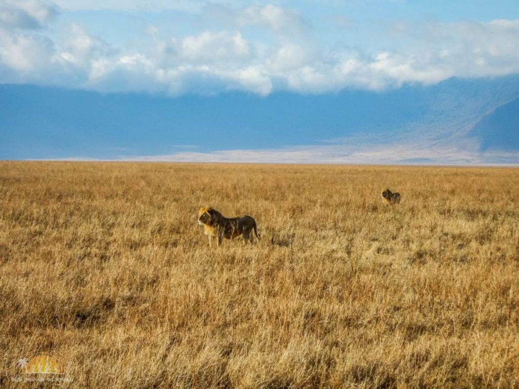 Tanzania safari Ngorongoro (87)