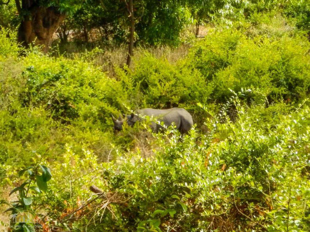 Tanzania safari Ngorongoro (90)