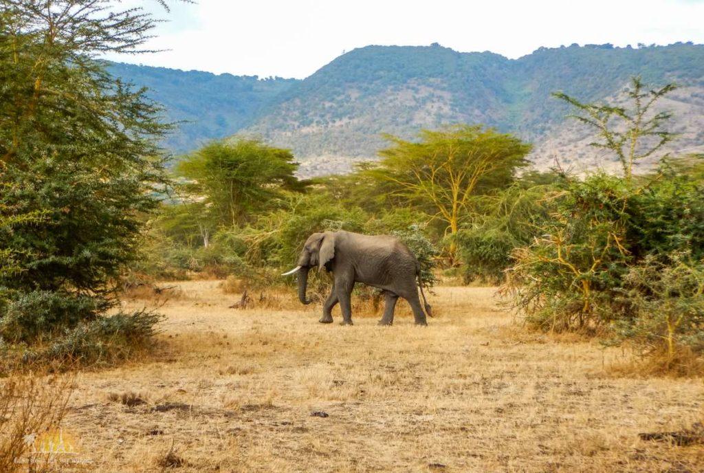 Tanzania safari Ngorongoro (91)