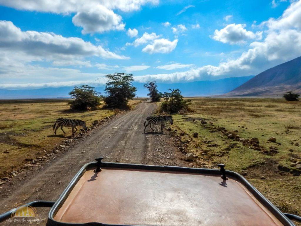 Tanzania safari Ngorongoro (92)