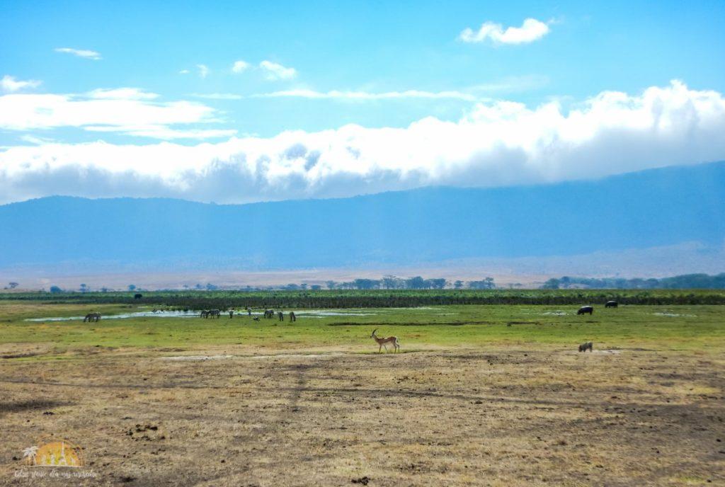 Tanzania safari Ngorongoro (93)