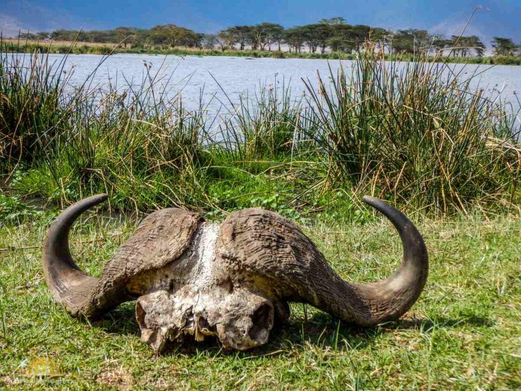 Tanzania safari Ngorongoro (95)