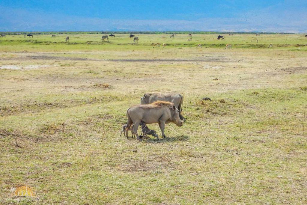 Tanzania safari Ngorongoro (98)