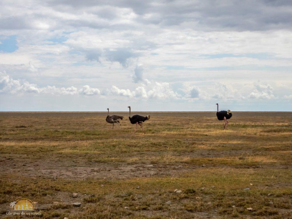 Tanzania safari Serengeti (51)