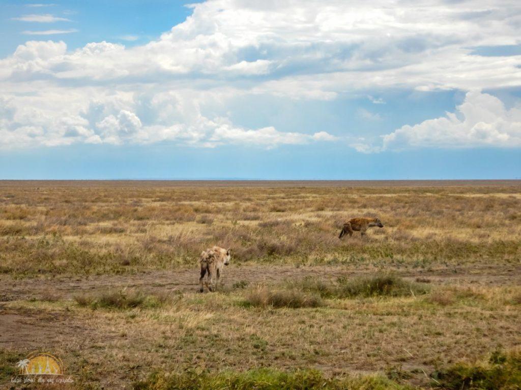 Tanzania safari Serengeti (52)