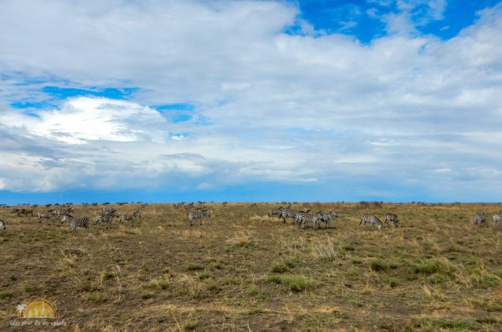 Tanzania safari Serengeti (55)