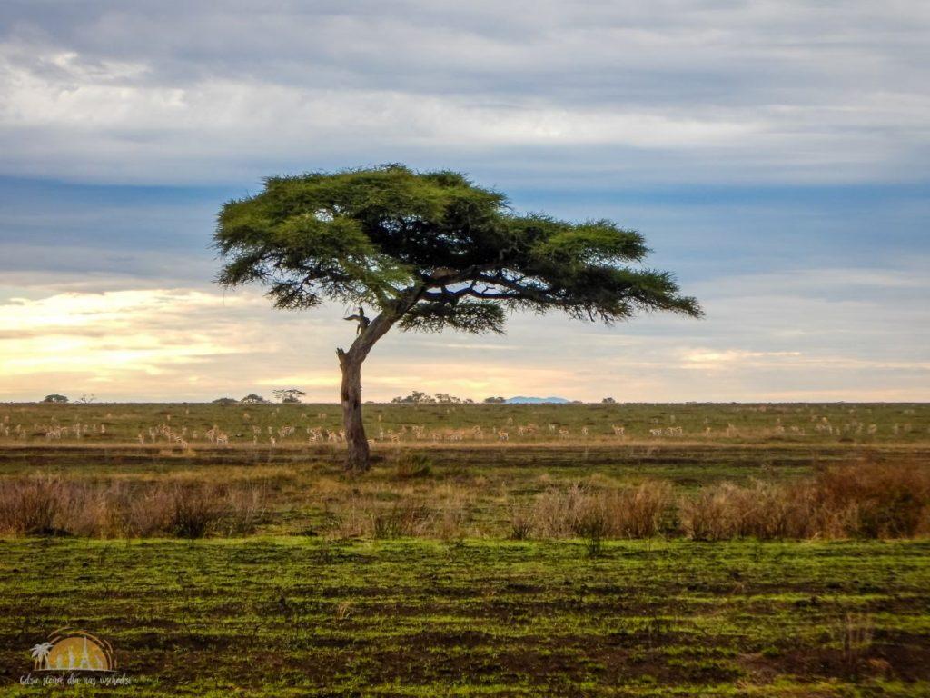 Tanzania safari Serengeti (58)
