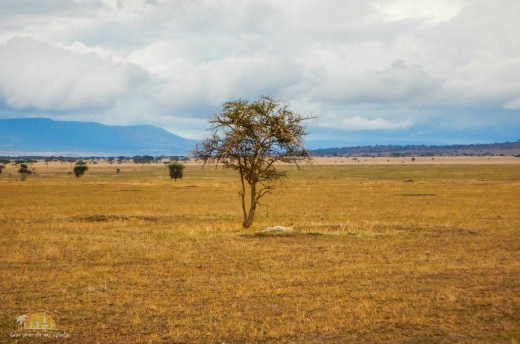 Tanzania safari Serengeti (60)