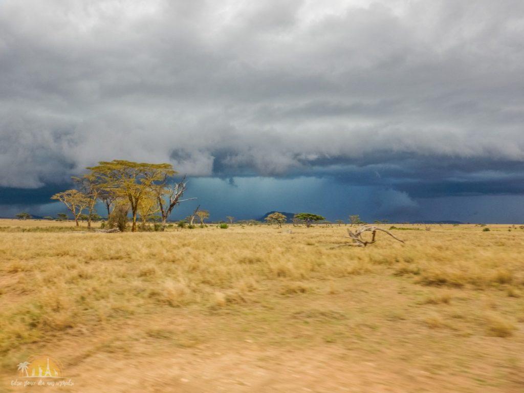 Tanzania safari Serengeti (61)