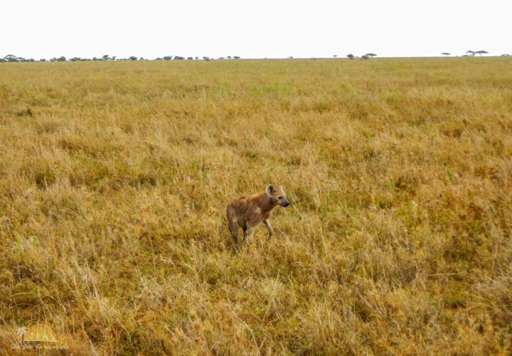 Tanzania safari Serengeti (65)