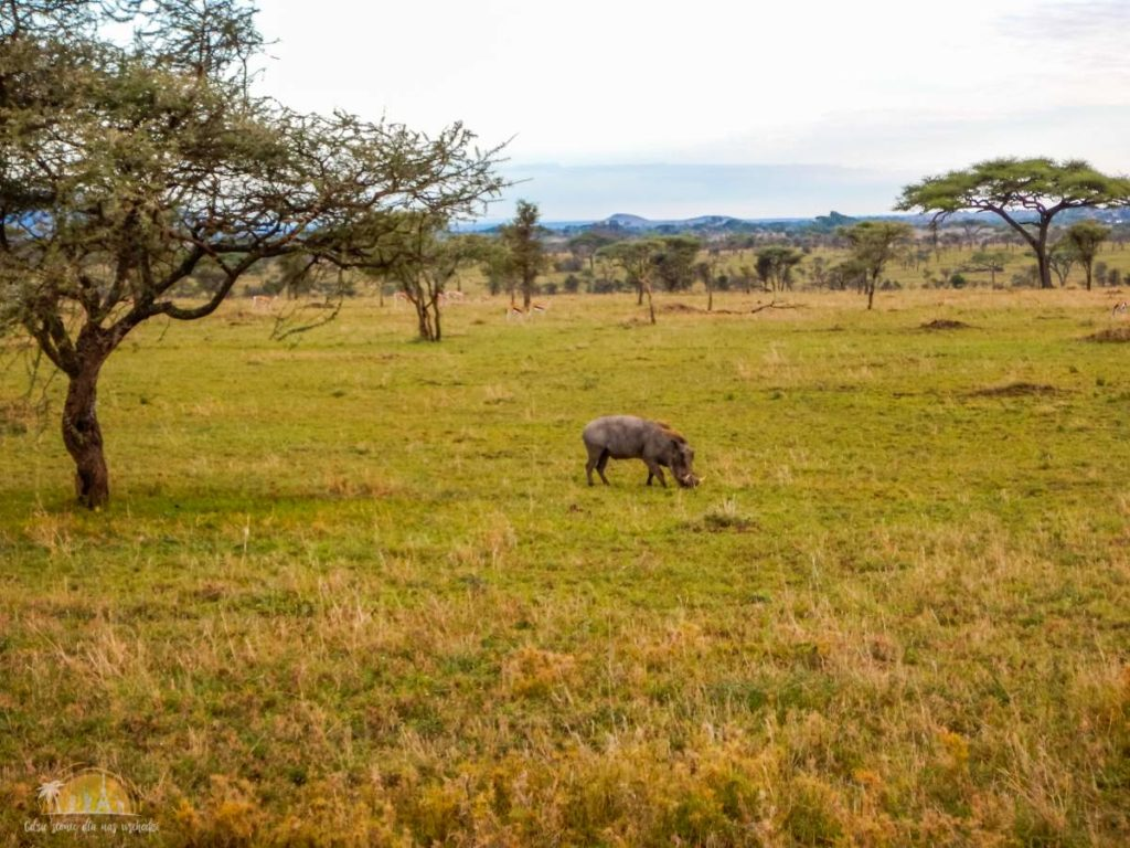 Tanzania safari Serengeti (66)