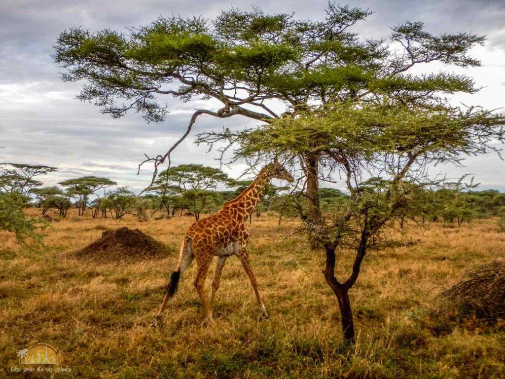 Tanzania safari Serengeti (67)