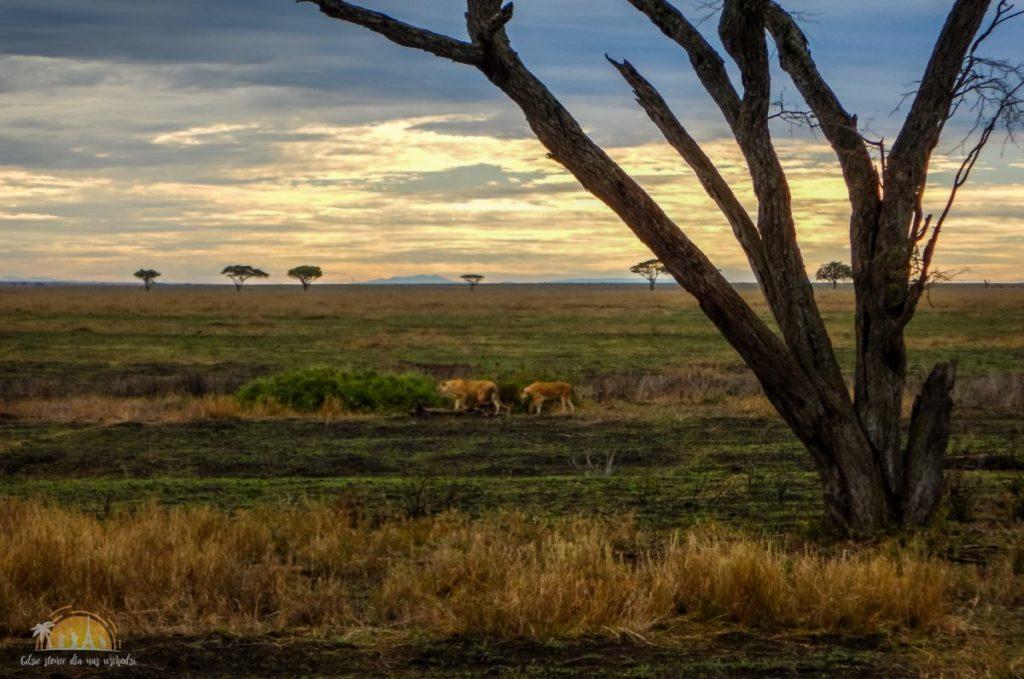 Tanzania safari Serengeti (68)