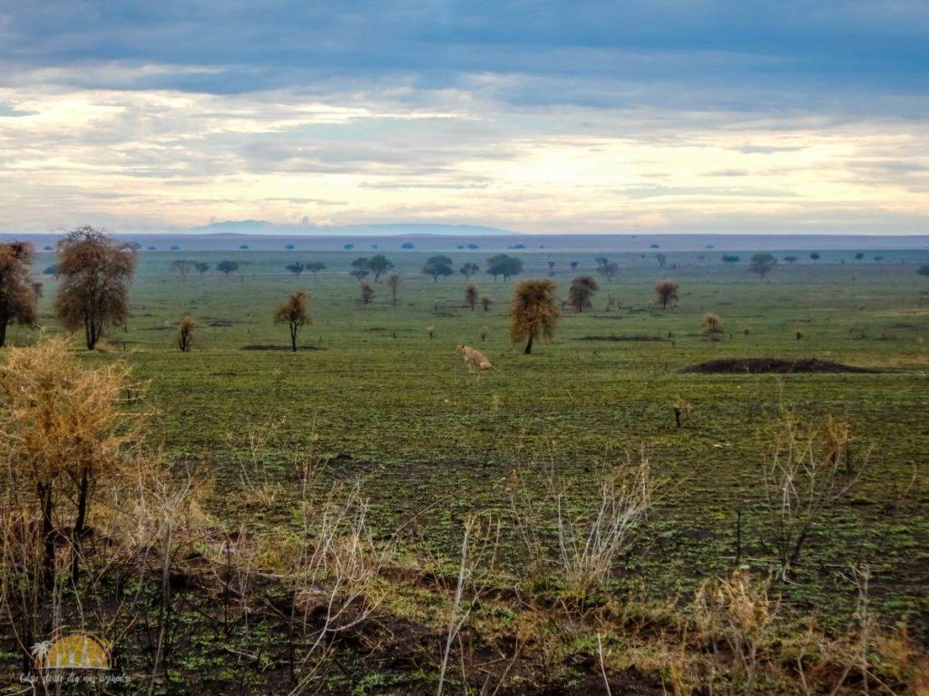 Tanzania safari Serengeti (69)