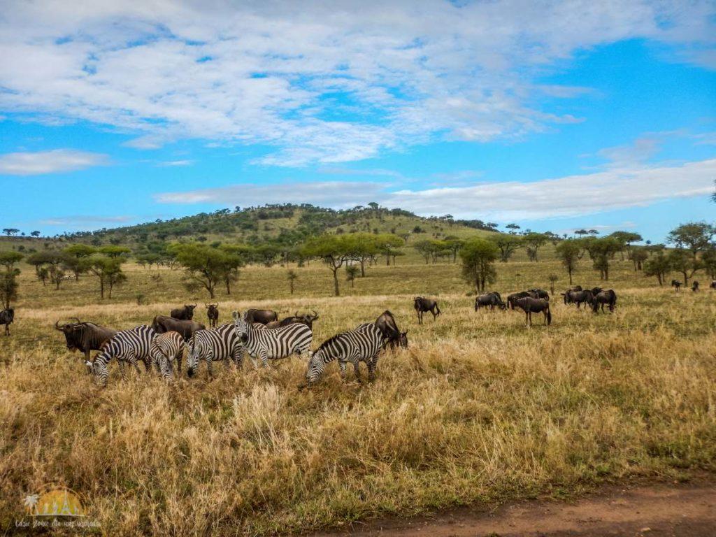 Tanzania safari Serengeti (70)