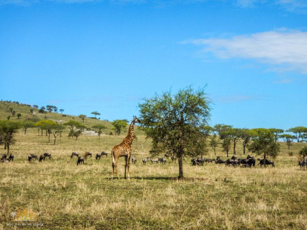 Tanzania safari Serengeti (72)