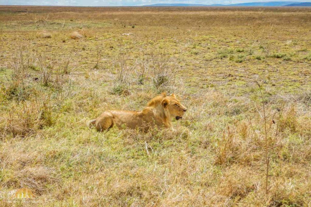 Tanzania safari Serengeti (73)