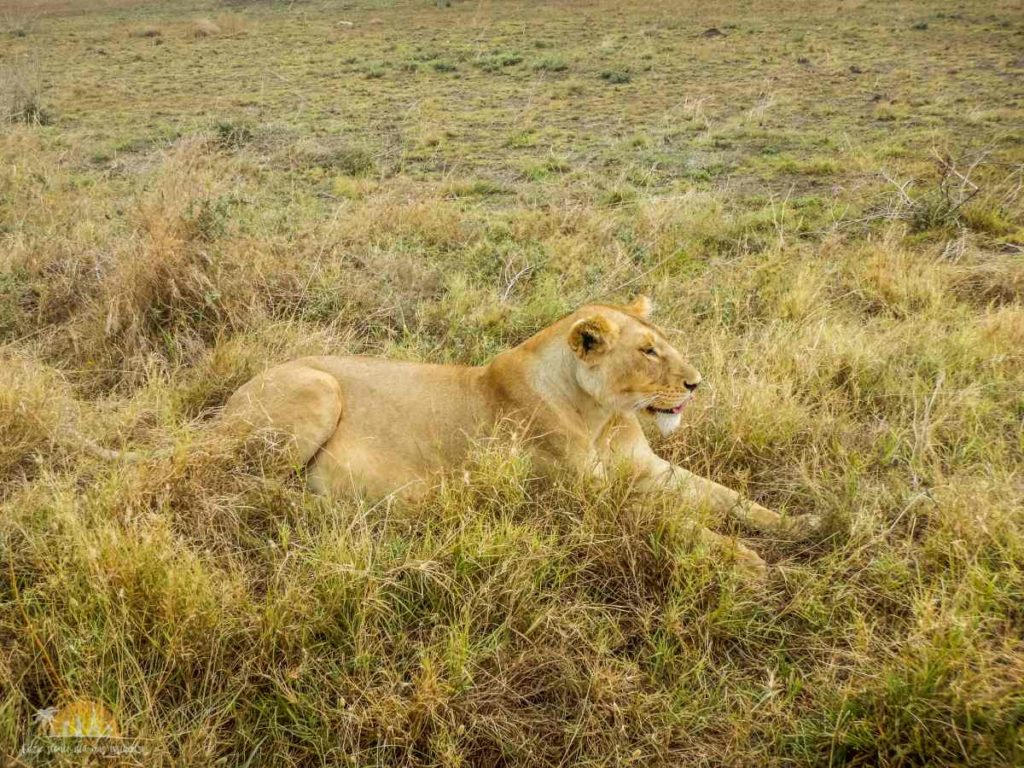 Tanzania safari Serengeti (74)