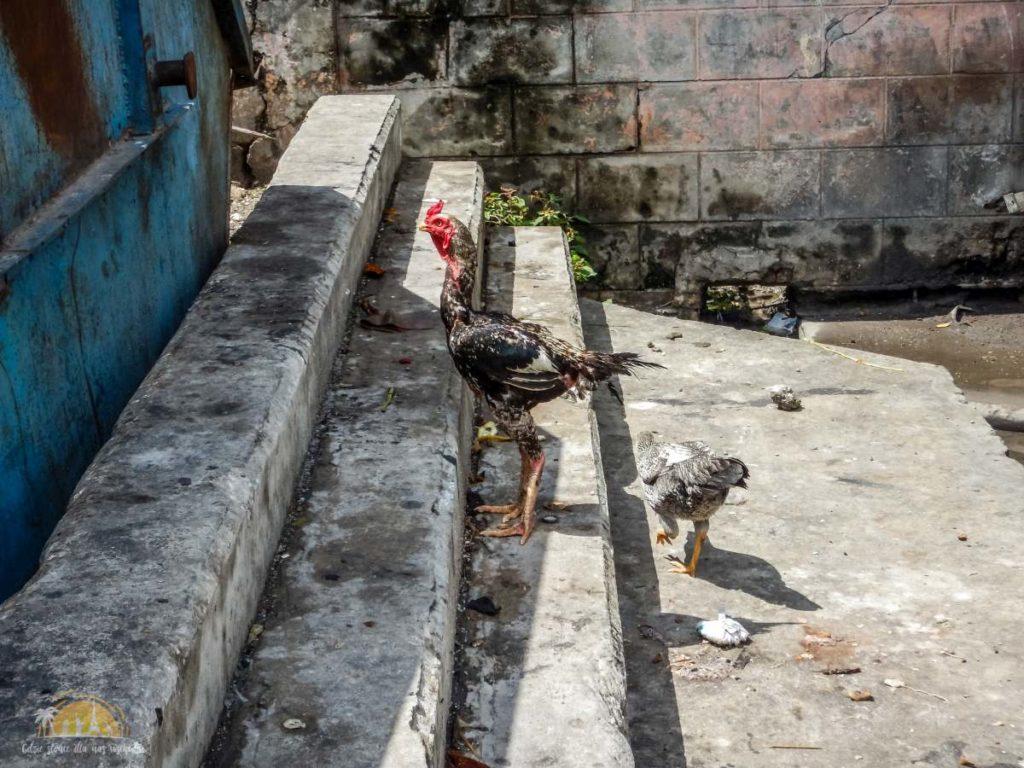 Zanzibar Stone Town 24