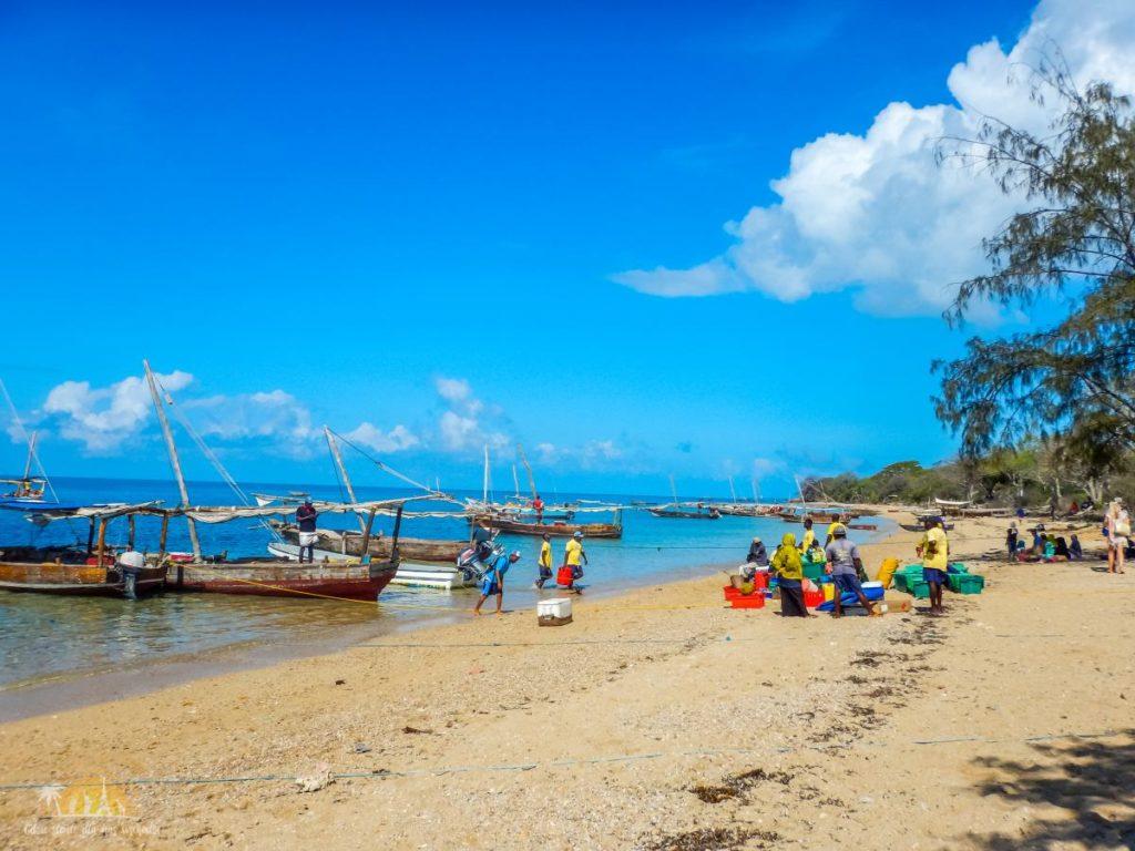 Zanzibar Atrakcje Blue Safari (1)
