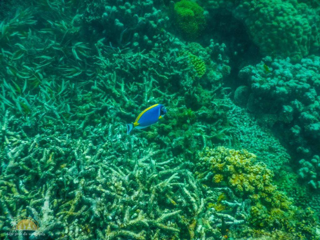 Zanzibar Atrakcje Blue Safari (11)