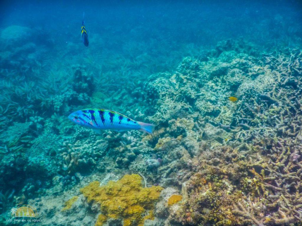 Zanzibar Atrakcje Blue Safari (12)
