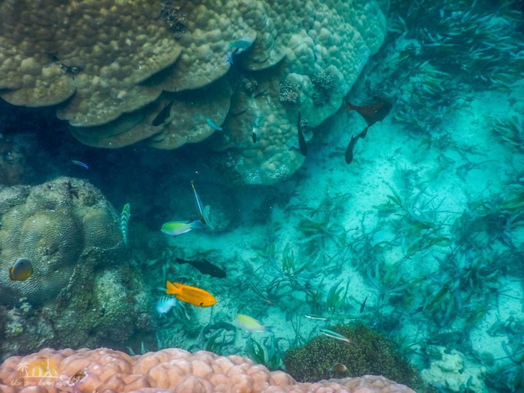Zanzibar Atrakcje Blue Safari (14)