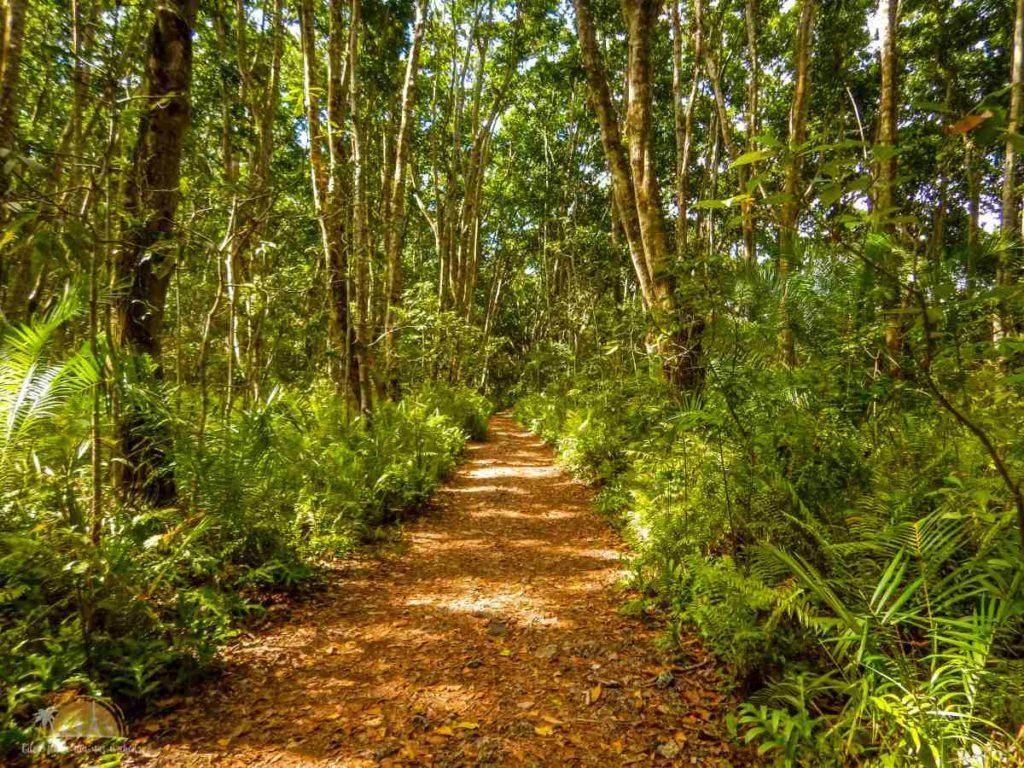 Zanzibar Atrakcje Jozani Forest (104)