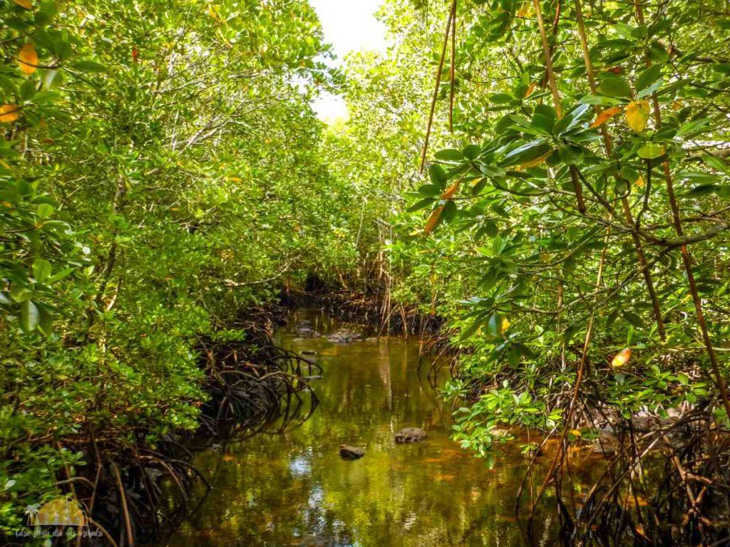 Zanzibar Atrakcje Jozani Forest (111)